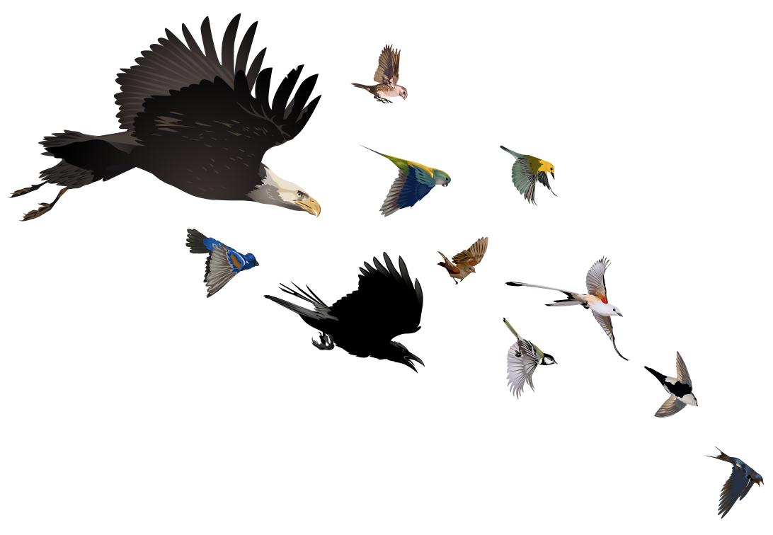 Racing birds